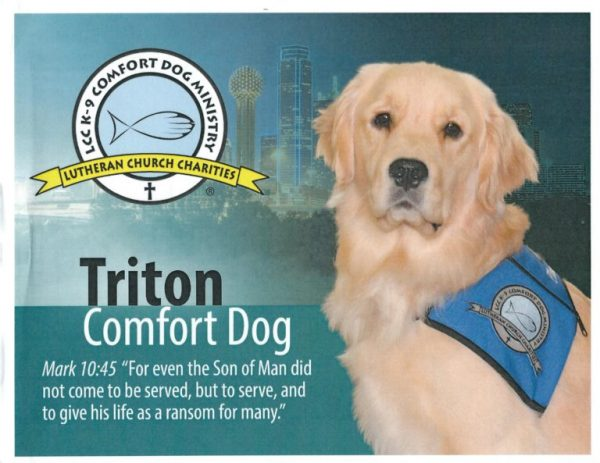 """Poster with Triton the golden retriever Comfort Dog wearing a jacket with the Comfort Dog Ministry. Poster includes the Comfort Dog Ministry logo and the Bible verse Mark 10:45 """"For even the Son of Man did not come to be served, but to serve, and to give his life a ransom for many."""""""